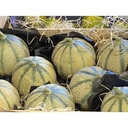 Melon d Italie