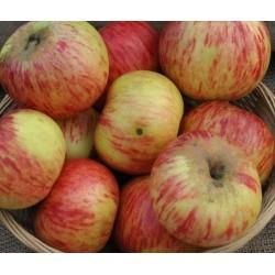 Pommes  d'août bio