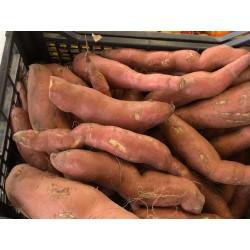 Patates douce belge bio