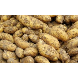 Pommes de terre à chair...