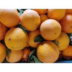 Orange feuille  bio  d italie