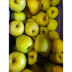 Pomme Gold flamme