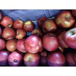 Pomme Royal gala ( pommes à...