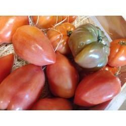 Nos tomates de pleine terre